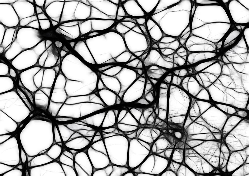 matriz celular